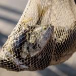 071_VII Edicion de Pesca en Rall.Pinedo.Sep16